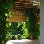 vitis_riparia_wisteria_sinensis